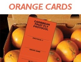 mmpcfl-citrus-industry-orange-cards